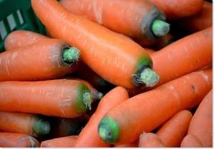 carrot_thumb5